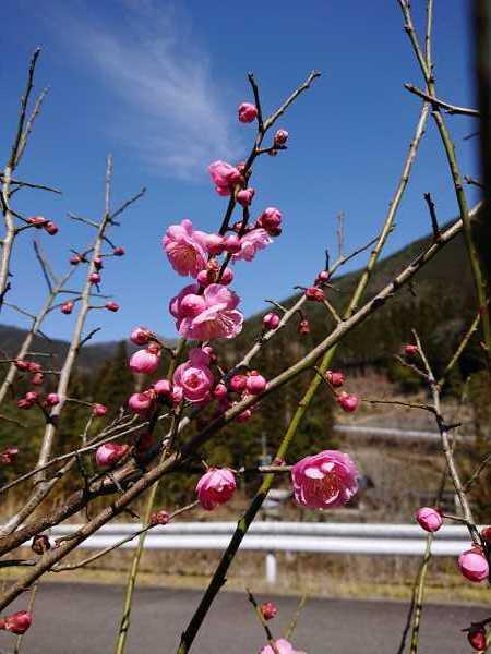 3月21日(土)ポカポカ陽気🌼_e0020051_14465329.jpg