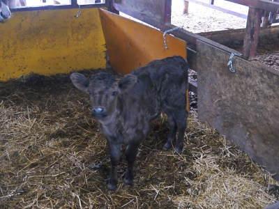 熊本県産黒毛和牛の精肉販売に向けて 「中野畜産」の牧場を現地取材!こだわりのエサについて!_a0254656_17202722.jpg