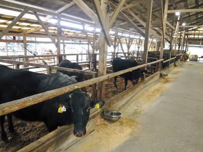 熊本県産黒毛和牛の精肉販売に向けて 「中野畜産」の牧場を現地取材!こだわりのエサについて!_a0254656_17312042.jpg
