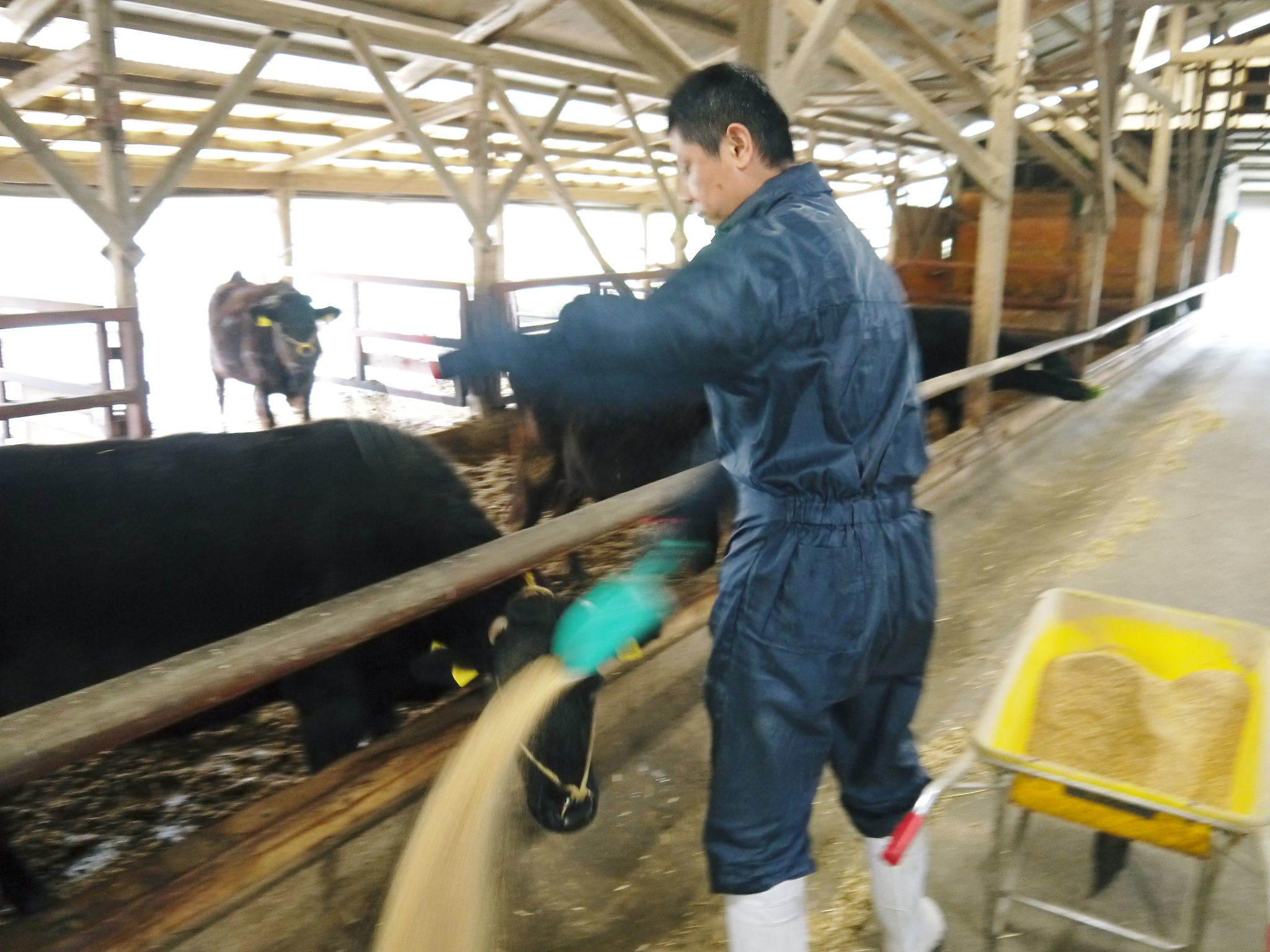 熊本県産黒毛和牛の精肉販売に向けて 「中野畜産」の牧場を現地取材!こだわりのエサについて!_a0254656_17431234.jpg