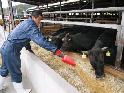 熊本県産黒毛和牛の精肉販売に向けて 「中野畜産」の牧場を現地取材!こだわりのエサについて!_a0254656_17471566.jpg