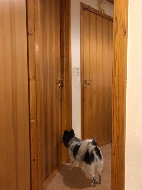 娘のお風呂を出待ちする犬_a0342172_21015692.jpg