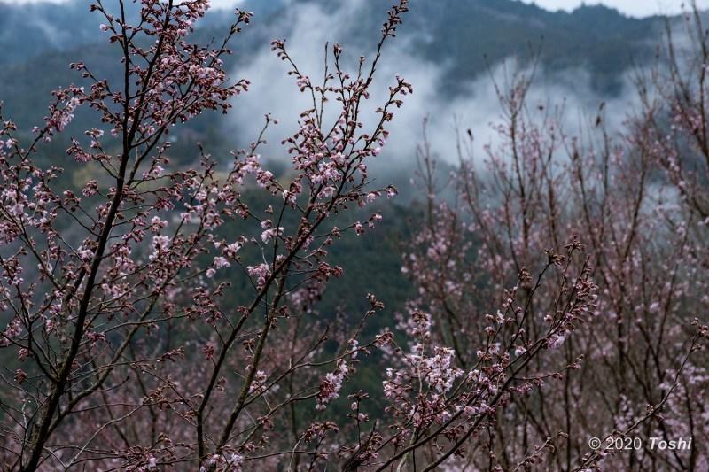 雨に煙る桃源郷_c0350572_22391414.jpg