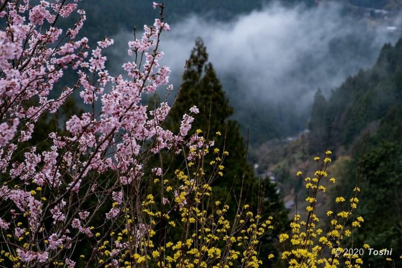 雨に煙る桃源郷_c0350572_22393012.jpg
