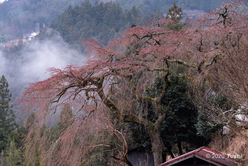 雨に煙る桃源郷_c0350572_22401554.jpg