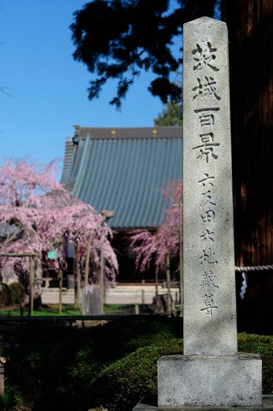 六地蔵寺の枝垂れ桜 ⓶ 水戸市六反田町 2020・03・20_e0143883_04022368.jpg