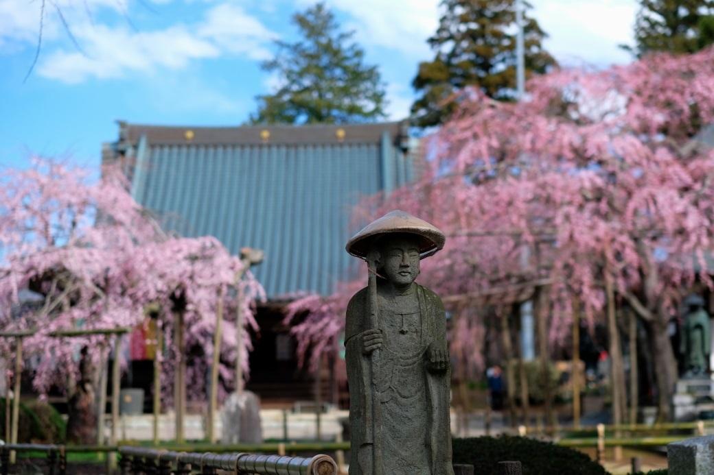 六地蔵寺の枝垂れ桜 ⓶ 水戸市六反田町 2020・03・20_e0143883_04035511.jpg