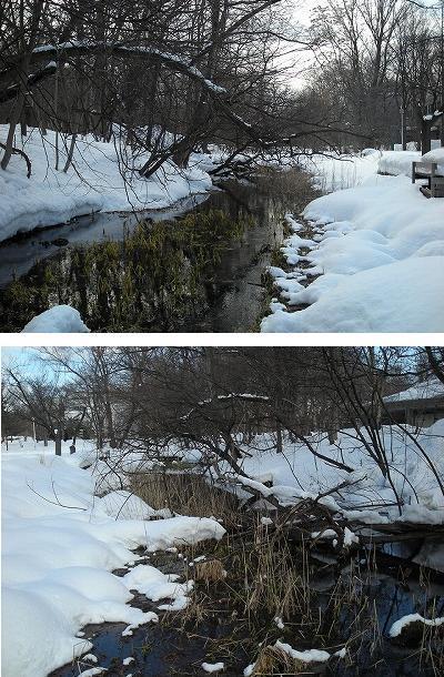 サクシュコトニ川の冬-2020-(2)_f0078286_08490984.jpg
