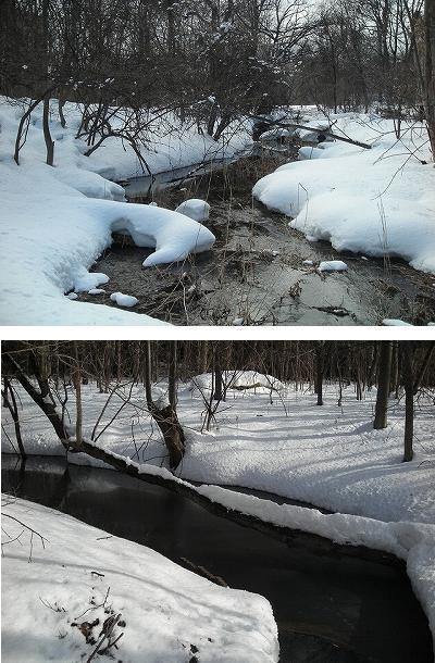 サクシュコトニ川の冬-2020-(2)_f0078286_08501462.jpg