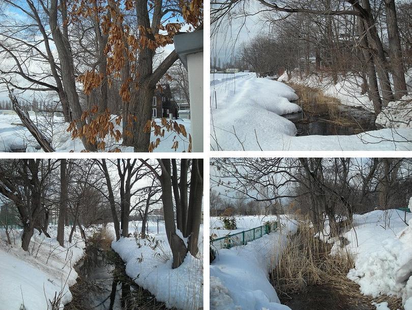 サクシュコトニ川の冬-2020-(2)_f0078286_08513100.jpg