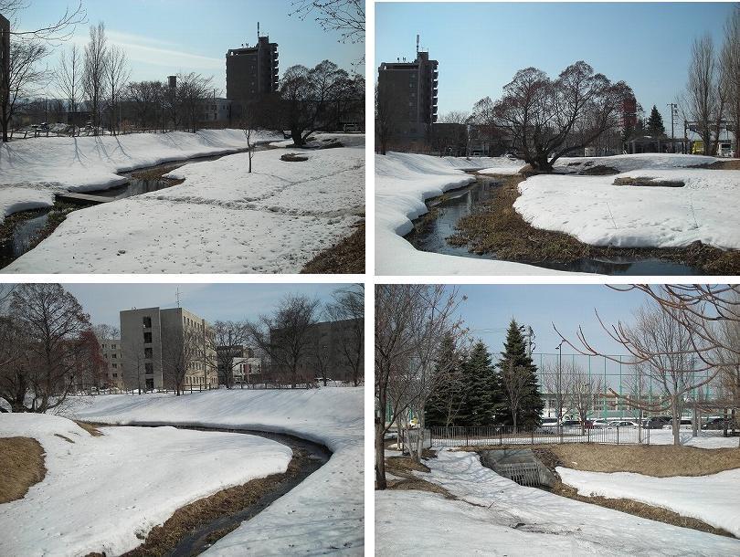サクシュコトニ川の冬-2020-(2)_f0078286_08534621.jpg