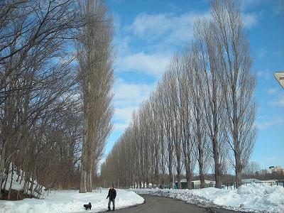 サクシュコトニ川の冬-2020-(2)_f0078286_08541508.jpg