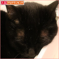 猫の演技_a0389088_03433223.jpg