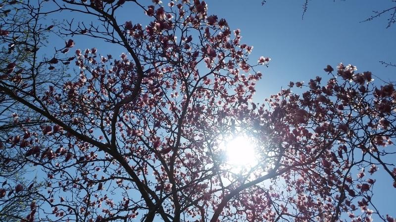 春 名前が、、、??_e0413591_13241082.jpg