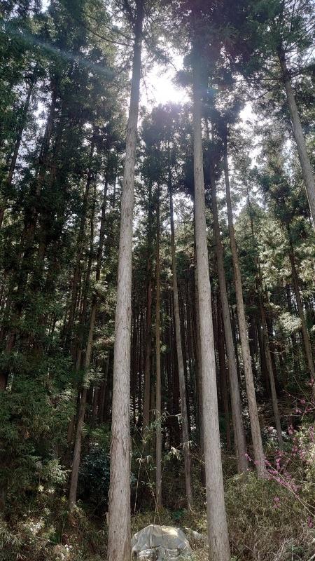 梅の公園の話_e0413199_14482151.jpg