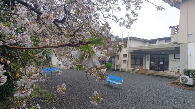 春うらら   8_b0239402_17252363.jpg