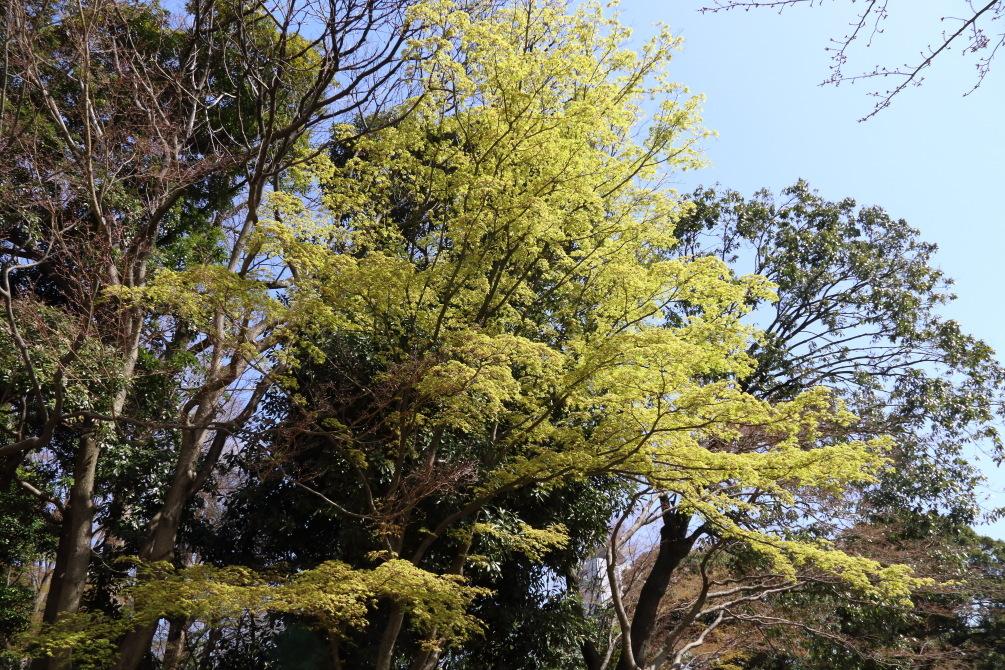春の気動車 - 2020年早春・小湊鉄道 -_b0190710_21553866.jpg