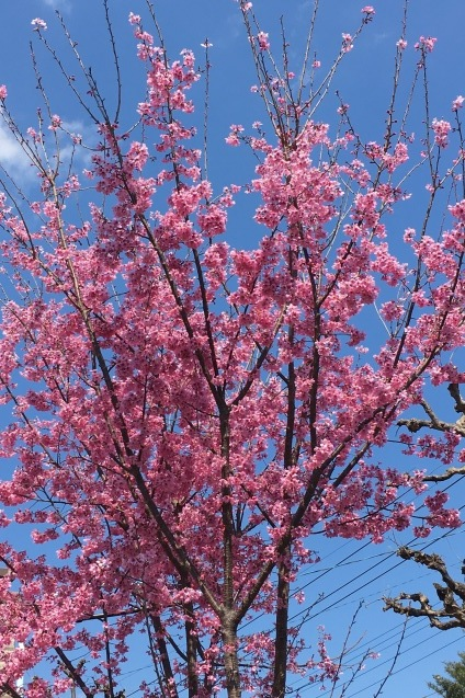 春の光景_b0377610_17061871.jpg