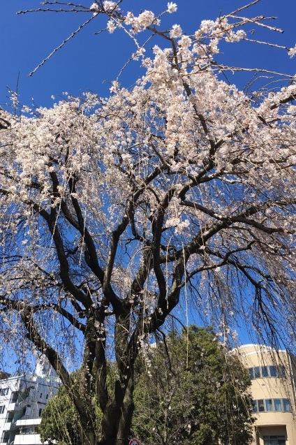 春の光景_b0377610_17061903.jpg