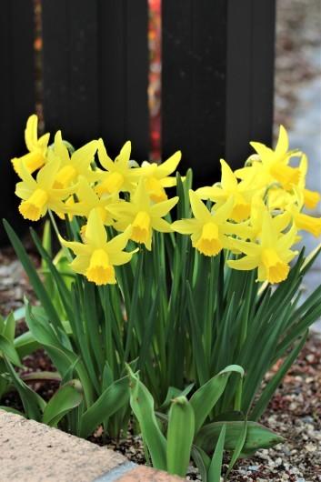 春の庭_d0114414_19200856.jpg