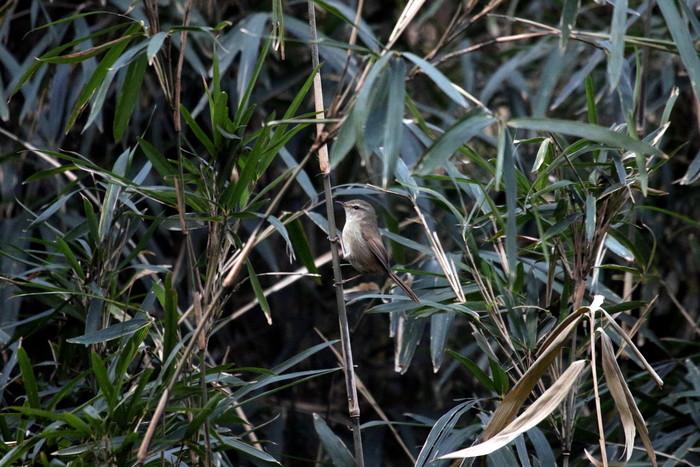 MFの赤松林で目的キクイタダキを待つ間_f0239515_221250100.jpg