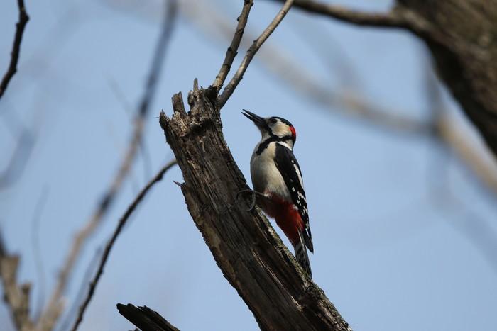 MFの赤松林で目的キクイタダキを待つ間_f0239515_22172279.jpg