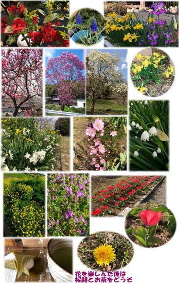 花(写メ)の散歩_d0070316_09251619.jpg