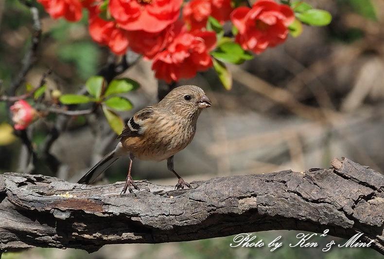 ベニマシコ三昧♪ジョウビタキさんも♪沢山の鳥さんと遊べました^^_e0218518_20262374.jpg