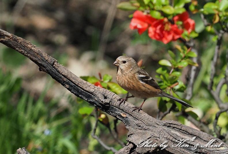 ベニマシコ三昧♪ジョウビタキさんも♪沢山の鳥さんと遊べました^^_e0218518_20271060.jpg