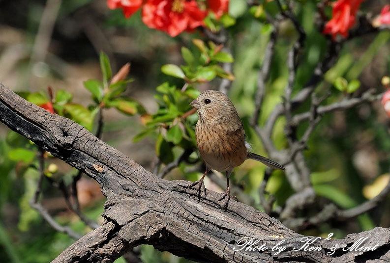ベニマシコ三昧♪ジョウビタキさんも♪沢山の鳥さんと遊べました^^_e0218518_20280535.jpg
