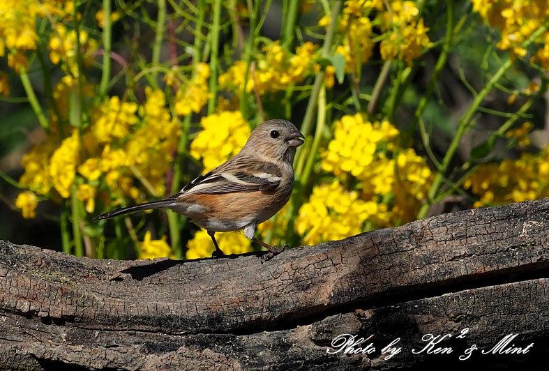 ベニマシコ三昧♪ジョウビタキさんも♪沢山の鳥さんと遊べました^^_e0218518_20282596.jpg