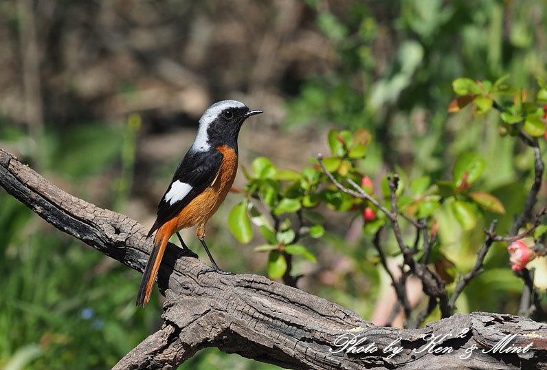 ベニマシコ三昧♪ジョウビタキさんも♪沢山の鳥さんと遊べました^^_e0218518_20285665.jpg