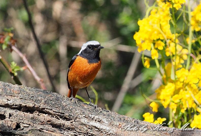 ベニマシコ三昧♪ジョウビタキさんも♪沢山の鳥さんと遊べました^^_e0218518_20291392.jpg