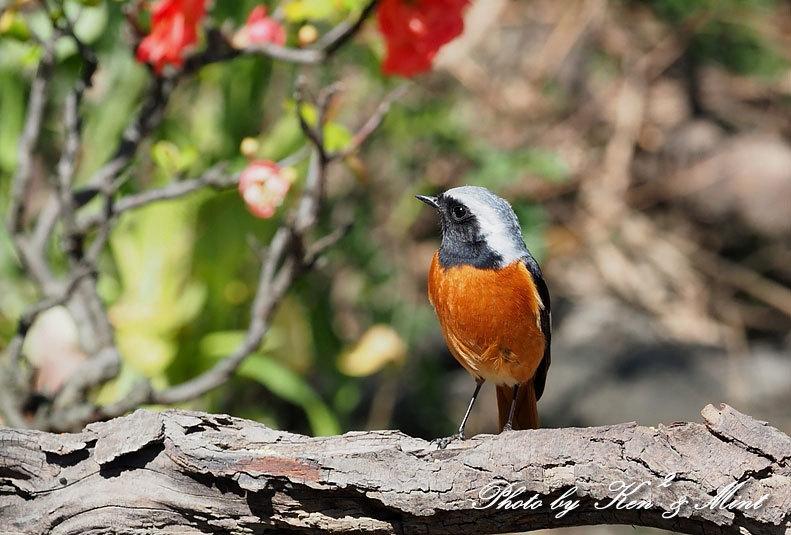 ベニマシコ三昧♪ジョウビタキさんも♪沢山の鳥さんと遊べました^^_e0218518_20292990.jpg