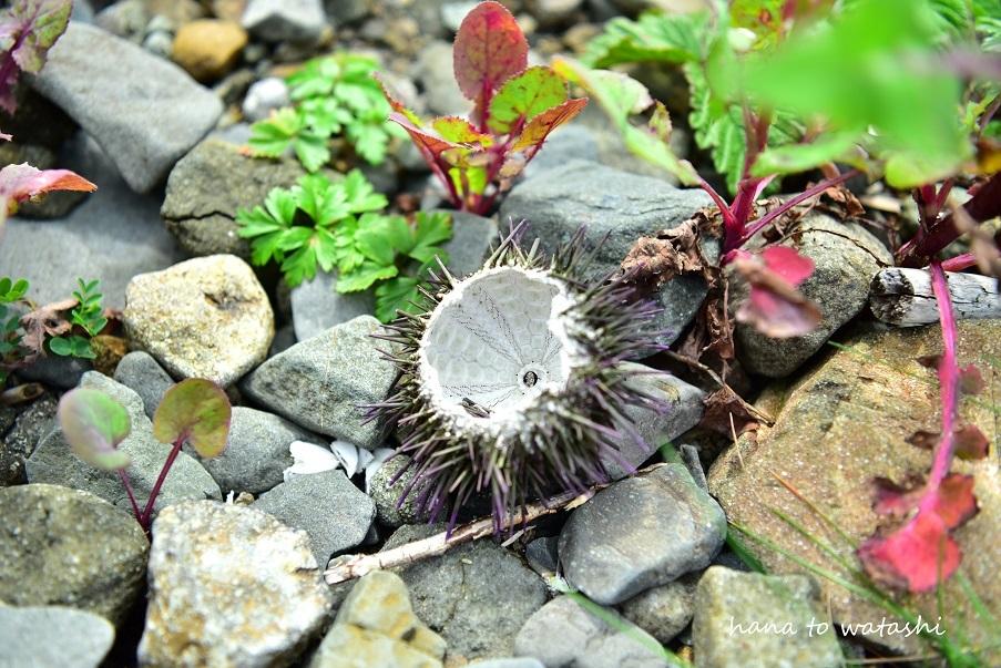 アマナ岩へ その3_e0120026_16415957.jpg