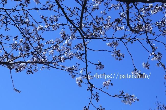 足立区舎人公園のさくら見学。_a0214329_19191922.jpg