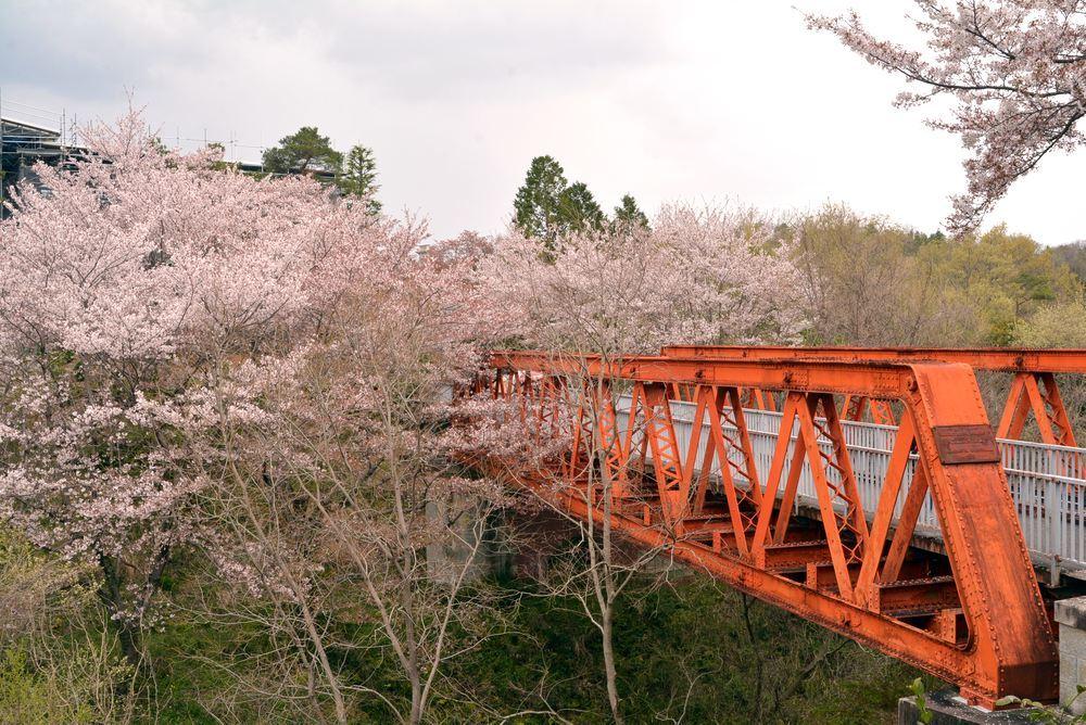 六郷川橋梁付近の桜_e0373930_20190493.jpg