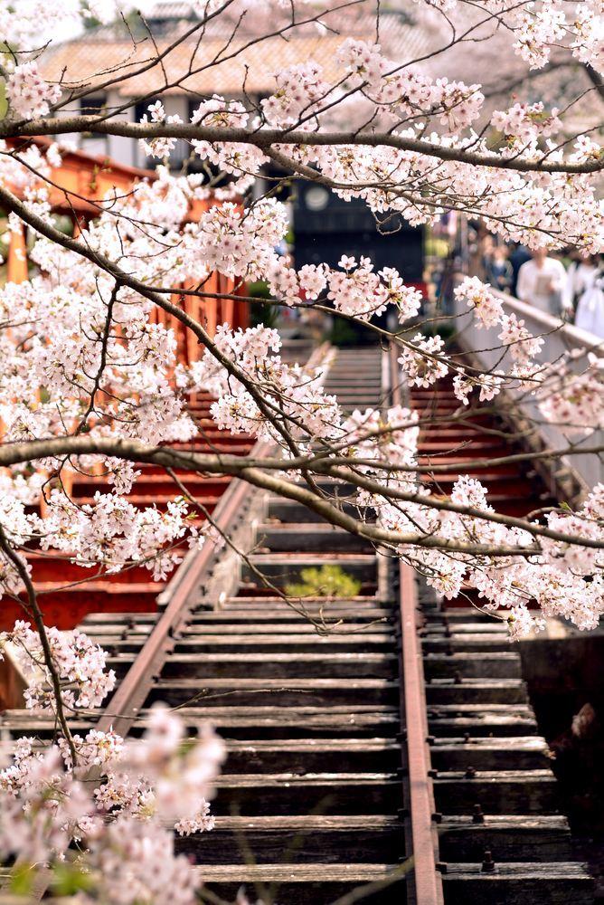 六郷川橋梁付近の桜_e0373930_20190498.jpg