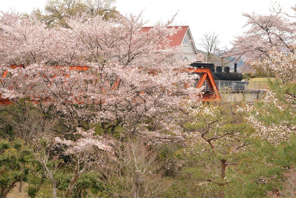 六郷川橋梁付近の桜_e0373930_20195188.jpg
