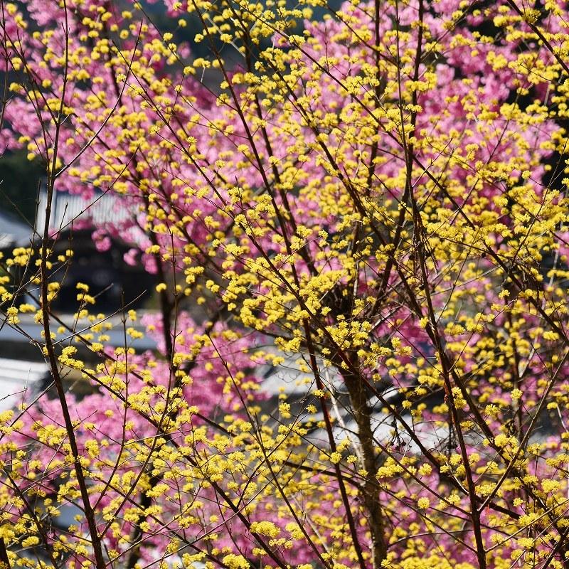 花詣で_f0050534_09010649.jpg