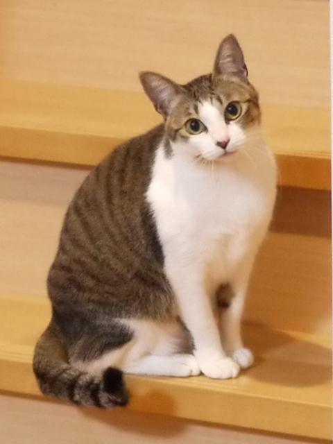 猫のお留守番 ゆずちゃん編。_a0143140_18345314.jpg