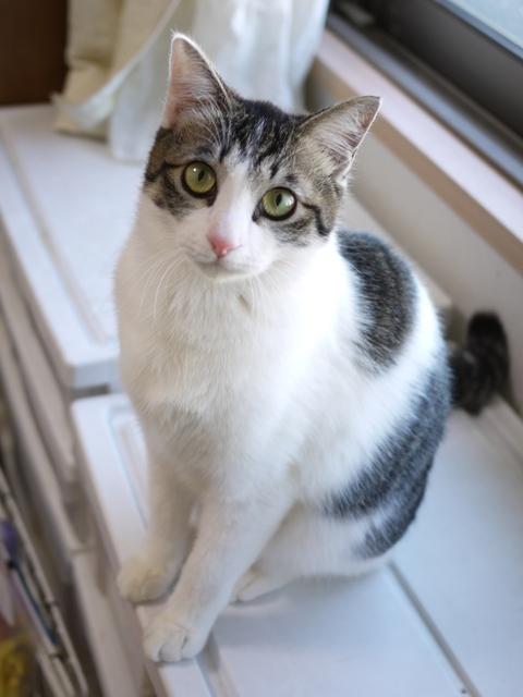 猫のお留守番 福くん編。_a0143140_18401200.jpg