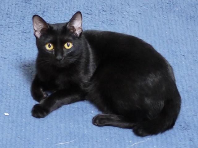 猫のお留守番 チョコちゃん編。_a0143140_18463342.jpg