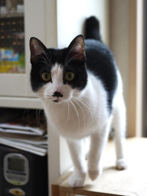 猫のお留守番 メイちゃん編。_a0143140_18464658.jpg