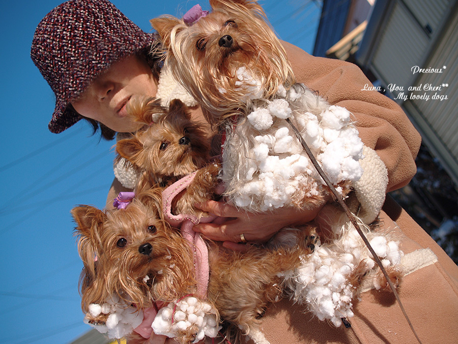 DOG PHOTO#142: 3wanco雪玉いっぱい。_c0101341_12224205.jpg