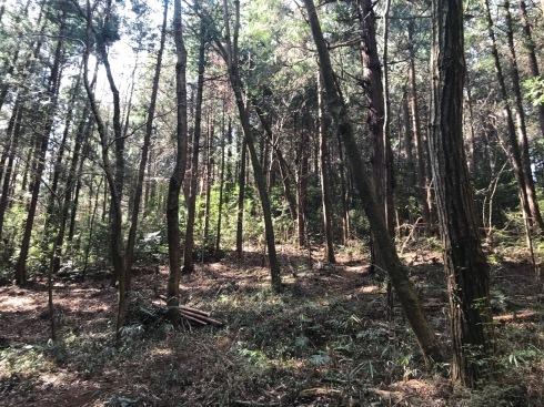 加治丘陵阿須山でマウンテンバイクに乗ってきました_e0304942_11494499.jpg