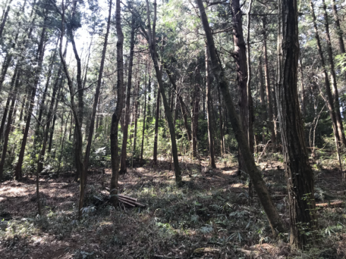 加治丘陵阿須山でマウンテンバイクに乗ってきました_e0304942_11533658.png