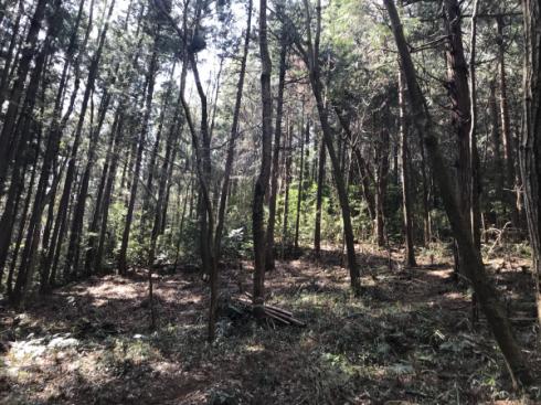 加治丘陵阿須山でマウンテンバイクに乗ってきました_e0304942_11545910.png