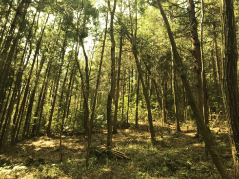 加治丘陵阿須山でマウンテンバイクに乗ってきました_e0304942_12011526.png