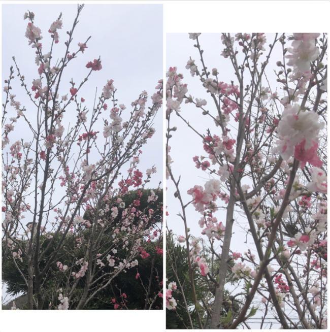 昭和の物_d0099845_13564443.jpg
